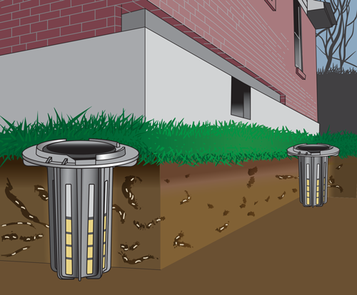 Termite Control Treatments And Best Practices